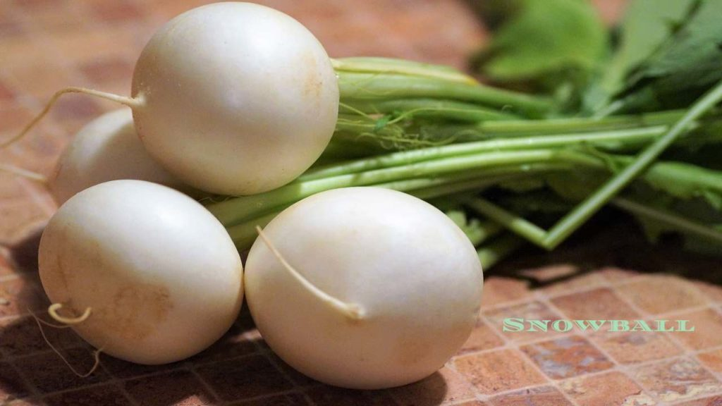 Snowball Turnip