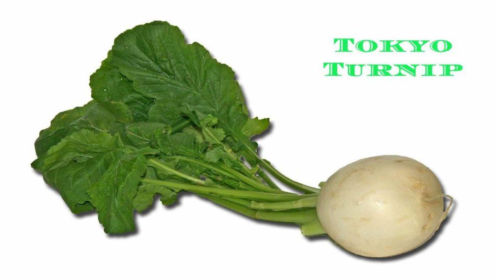 Tokyo Turnip