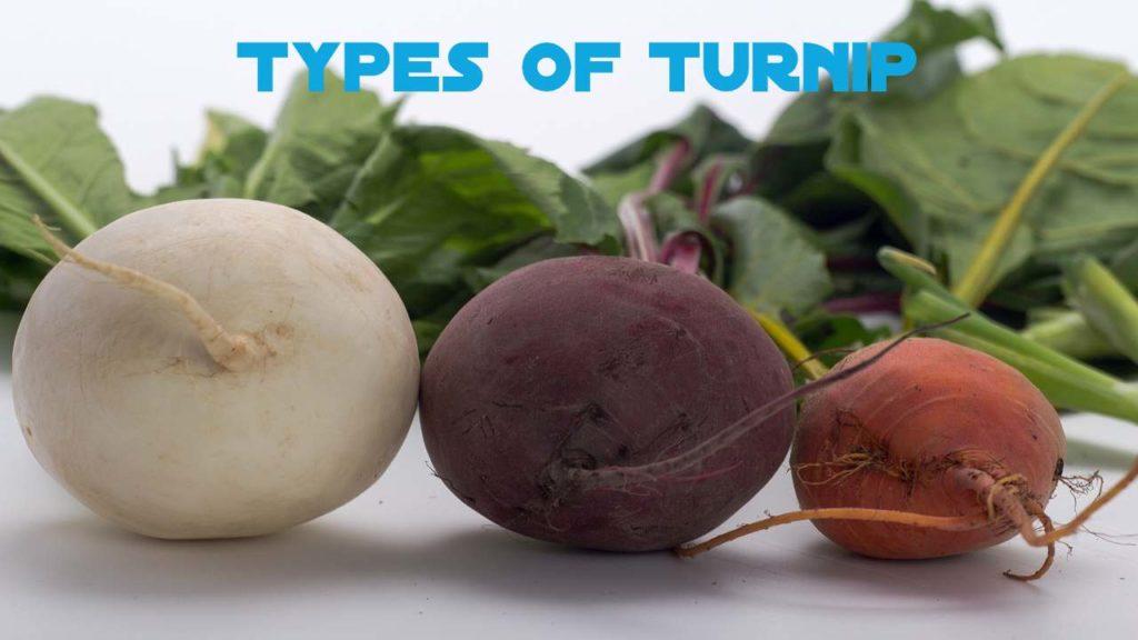 Types of Turnip