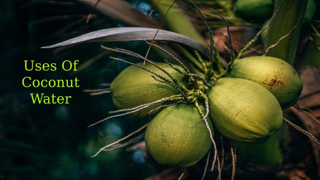 Uses Of Coconut Water