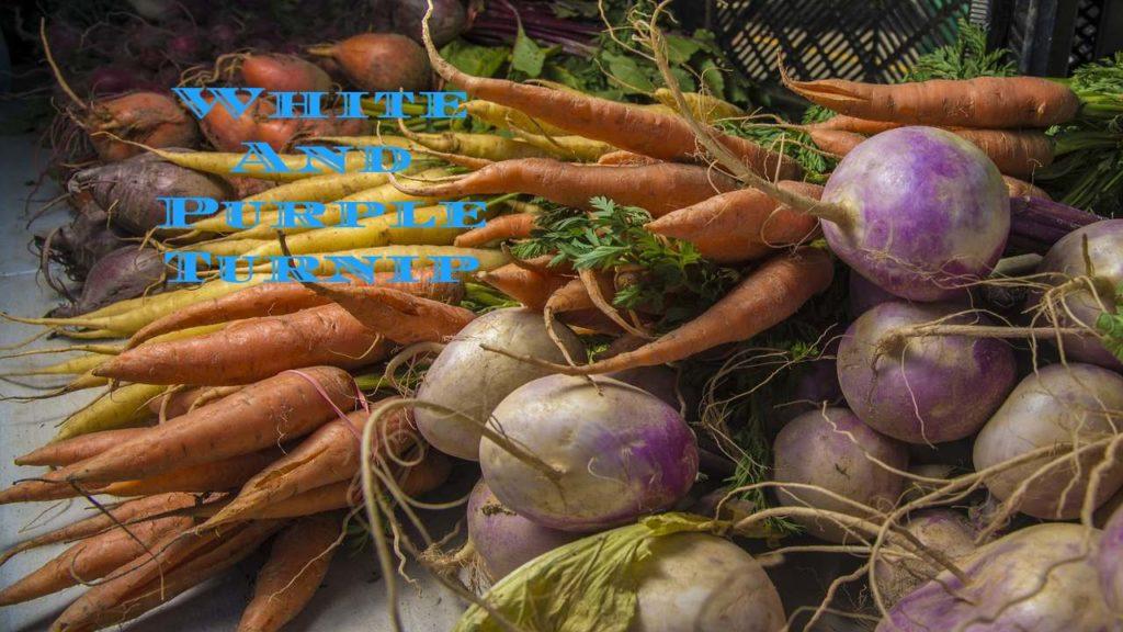 White And Purple Turnip