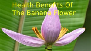 The Banana Flower