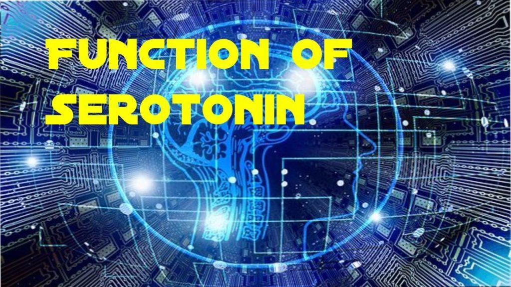Function Of Serotonin