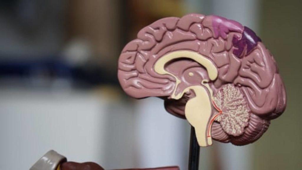 Brain Function drinking water