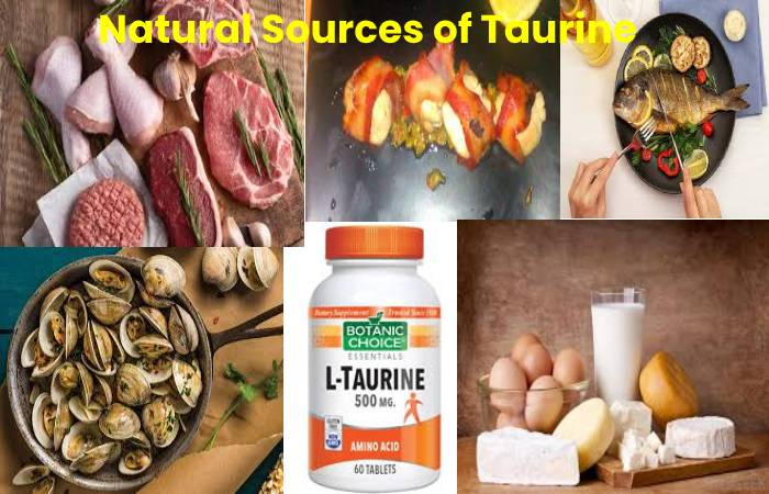 Natural Sources of Taurine